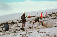 Roy Arbon, Colin Monteath, Harry Keys. Mountain face rescue team members mark out crevasses. © NZ Police.